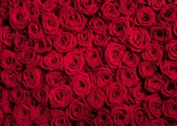Red Rose Flower Background Valentine's Day Backdrop