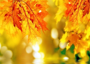 Red Leaf And Lake Water Bokeh Fall Backdrop Studio Portrait Photography Background