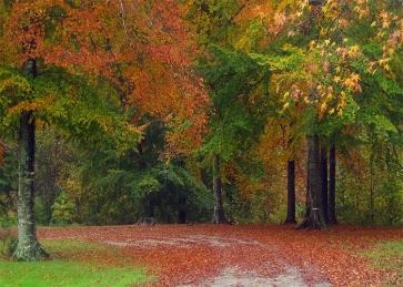 Fallen Red Leaf Green Forest Fall Wedding Backdrop Studio Portrait Photography Background