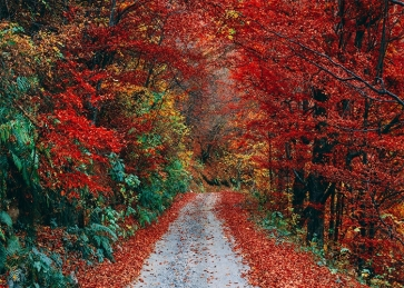 Roadside Red Leaf Forest Fall Backdrop Studio Portrait Photography Background