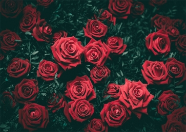 Red Rose Wall Backdrop Valentines Wedding Photography Background