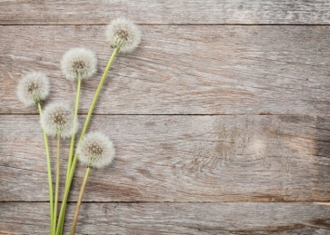 White Dandelion on Horizontal Texture Wood Drop Studios Backdrops