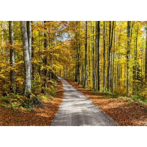 On Both Sides Of The Road Forest Fall Backdrop Studio Portrait Photography Background