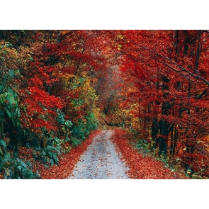 Roadside Red Leaf Forest Fall Backdrop Studio Portrait Photography Background