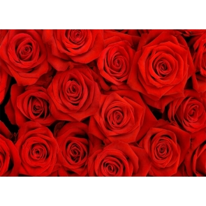 Red Rose Wall Backdrop Valentines Day Wedding Photography Background
