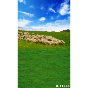 White Sheep on Green Grasslands Scenic Photography Backgrounds and Props
