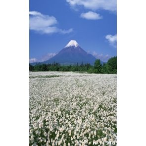 Rustic Scenic Sea of White Flowers Snow Mountaintop Picture Backdrop