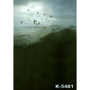 Scenic Night Seaside Seagulls Beach Photo Drop Background