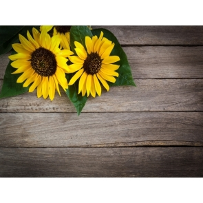 Wood Backdrop With Sunflower Flowers Photography Background