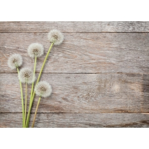 White Dandelion on Horizontal Texture Wood Drop Studios Backdrops