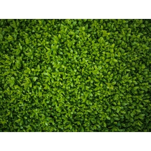 Baby Shower Grass Wall Backdrop Children Birthday Party Photography Background