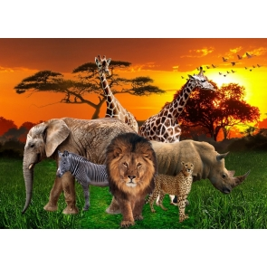 African Safari Backdrops Lion Unique Photo Vinyl Background
