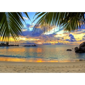 In The Sunset Palm Tree Leaf Ocean Beach Backdrop Photography Background