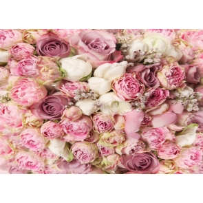 Pink Off White Bright Roses Flower Wedding Background Valentine's Day Backdrop